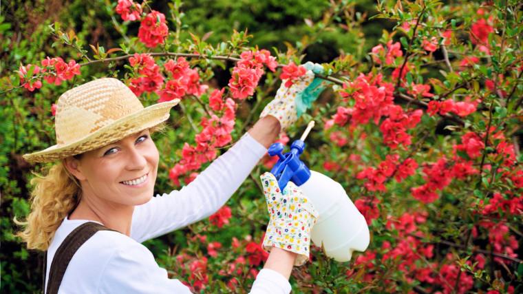 Посадите во дворе цветы