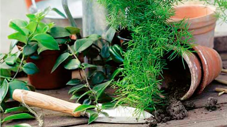 Несколько советов о пересадке комнатных растений